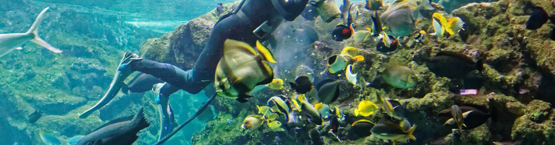 Oceanopolis Brest