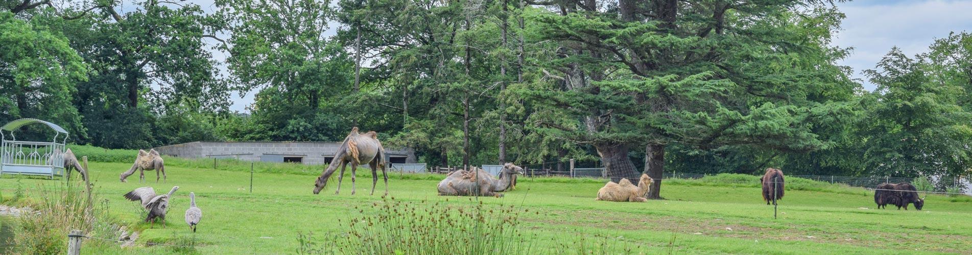 Parc de Branfere